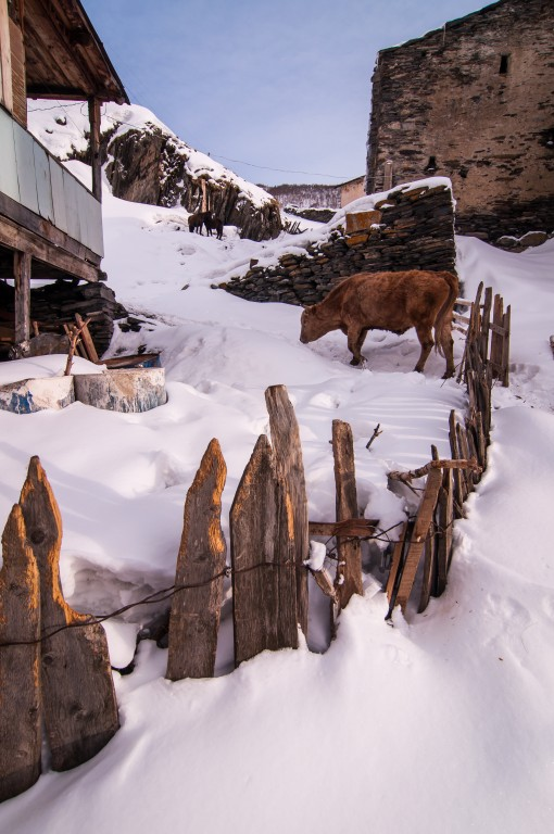 Typical village in Svaneti: simple homes and livestock. In winter, some towns can only be reached on four-wheelers or with snow chains.