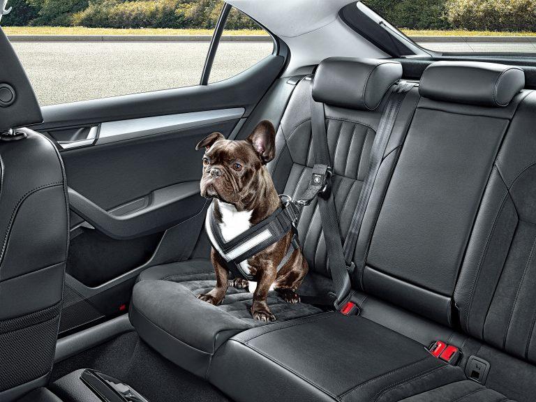 K dispozici ve velikostech S až XL: bezpečnostní pás pro psa