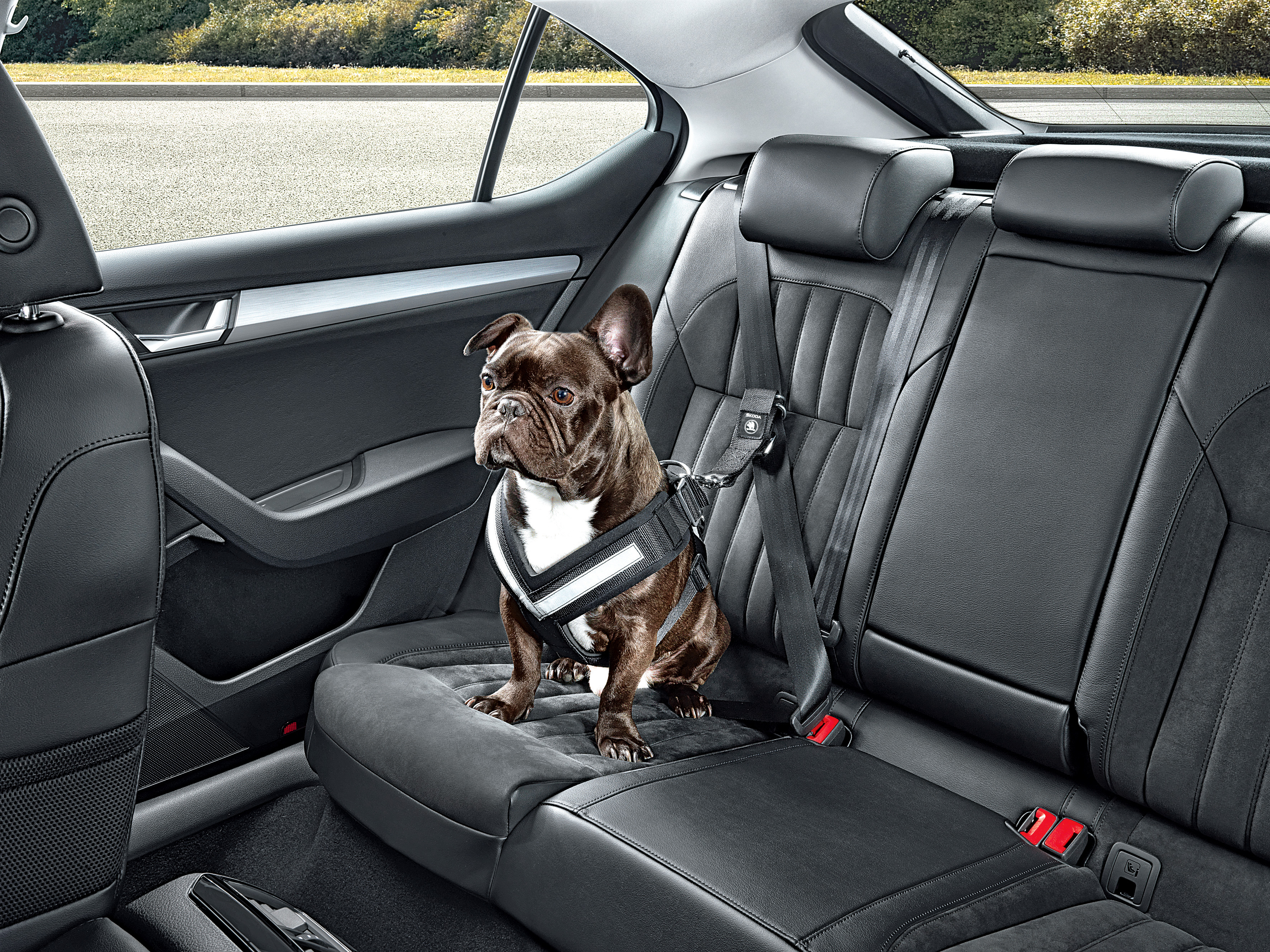 Just Made For Dog Lovers Skoda Offers Comprehensive Accessories For Keeping Your Dogs Safe In The Car Skoda Storyboard
