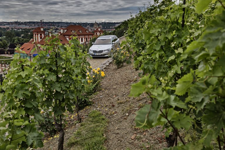 Vineyards on the Vltava