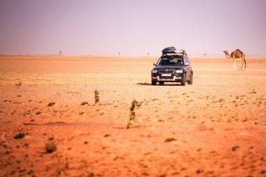 V Mauritánii žije mnohem více velbloudů než lidí.