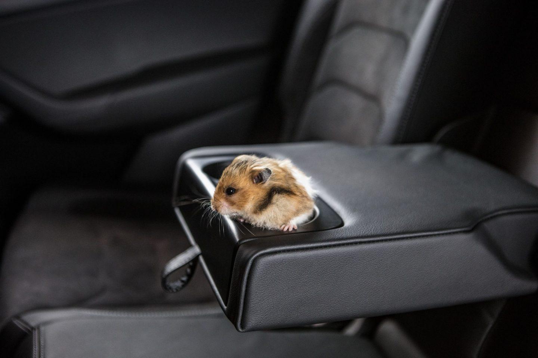 10 tipů pro cestování se zvířaty