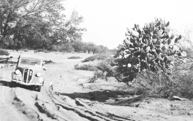 Elstners-ride-desert-cactus-1