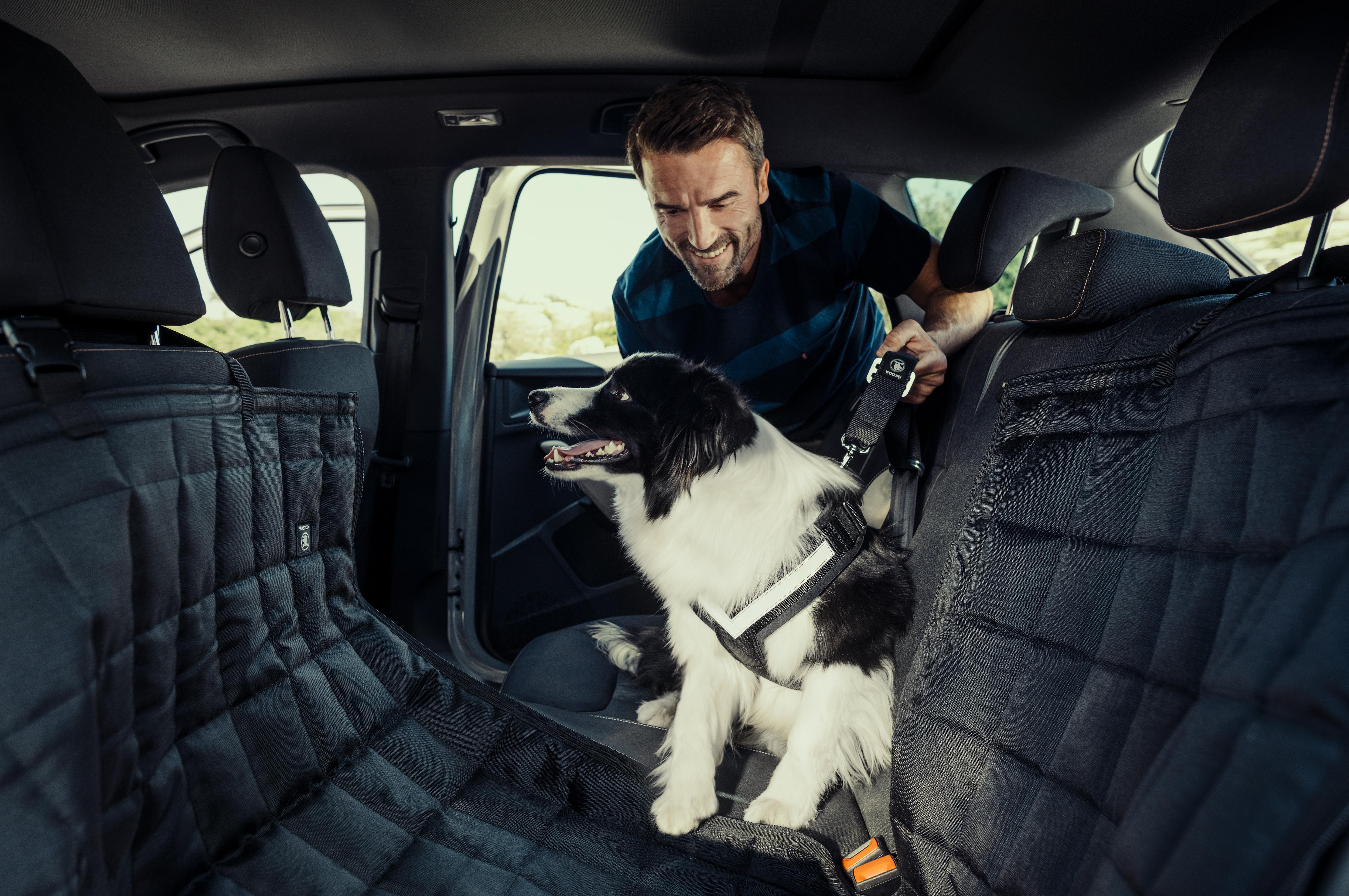 SAFETY_KAMIQ_dog